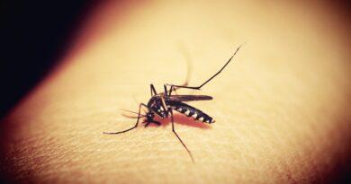 Epidemia de dengue no Paraná