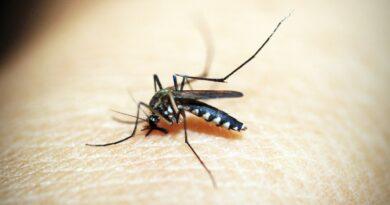 Paraná encerra período com mais de 220 mil casos de dengue