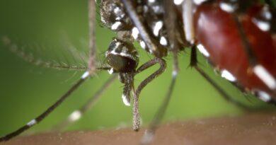 Dengue no Paraná